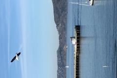 13 Terrence Narinesingh Photography at Fishermans Wharf Pier San Francisco California
